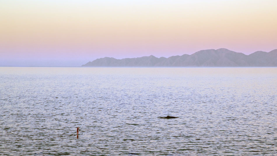Paddleboard and whale